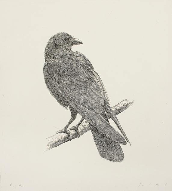 Autor: José Fors / Título: Cuervo / aguafuerte / 53x48 cm - 80x66 cm/ Ed: 40