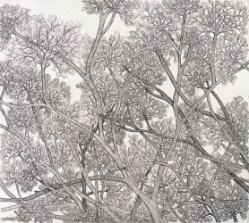 Autor: Lourdes Huber / S/T / 54x49; 6x78 c / aguafuerte / Edición: 45