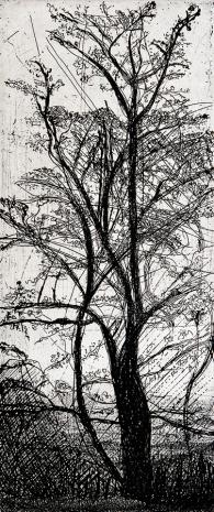 Autor: Cecilia Santos / Título: Árbol / Técnica: aguafuerte / 43x26 c / Ed: 9 / US$ 200