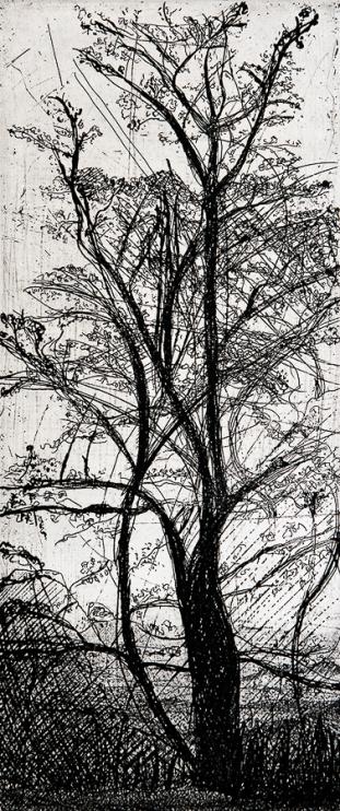 Autor: Santos / Título: Árbol / Técnica: aguafuerte / 43x26 c / Ed: 9 / US$ 200