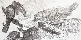 Autor: Pablo Serna / Título: Aves / Técnica: barniz blando / Medida placa 50x99 cm - papel 60x108 cm / Ed: 14